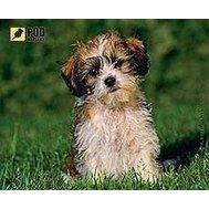 Фото коврика для мыши Podmyshku Лохматый щенок