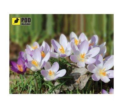 Фото коврика для мыши Podmyshku Весна-Крокусы